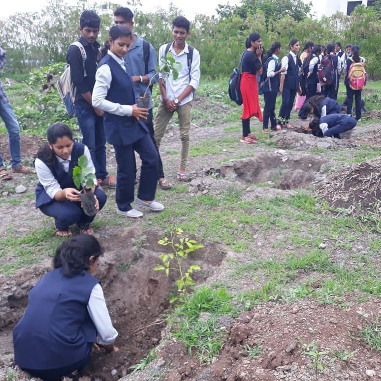 tree plantation (5)